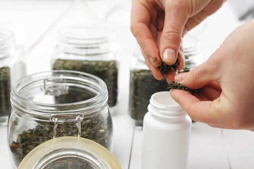 Czystek: jak działa na organizm? Zastosowanie, przeciwwskazania i efekty stosowania czystka.